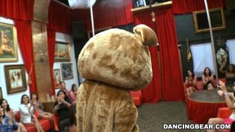 Amateurs in 'Crashing the club! Dancing Bear Style!'