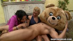 Amateurs - Remy's Dancing Bear Fiesta (Thumb 924)