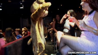 Amateurs in 'These Ladies Are Wild For The Bear!'